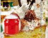 Законсервированная законсервированная вишнями еда чонсервных банк законсервированная