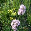 Comprimés de pollen de fleurs sauvages sauvages