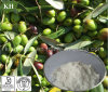 Ácido oleanólico el 60%, el 98% del extracto brillante natural puro de Privet