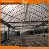 F-Clean Film Roof를 가진 튼튼한 Glass Wall Greenhouse