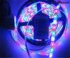 音楽コントローラが付いている健全な実行中の適用範囲が広い5050 RGB LEDのストリップ