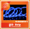 30LEDs/M 12VDC SMD5050 IP67 con CE e RoHS Approved