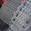 Rete fissa galvanizzata del campo del bestiame della rete fissa per la rete fissa animale