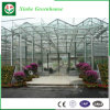 Estufa de Vidro tipo Venlo para cultivo de flores e produtos hortícolas