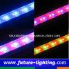 Светильники света прокладки 60PCS СИД твердые 5mm СИД (FL-WLB60D2)