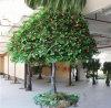 Grande commercio all'ingrosso decorativo artificiale di melo di falsificazione di melo