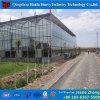 Hydroponic 시스템을%s 가진 중국 공장 공급 Venlo 유리제 온실