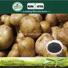 Kingeta riduce il concime organico NPK 8-6-18 del fertilizzante composto di Biohar di diffusione di malattia
