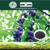 Il carbonio di fertilità di aumento di Kingeta ha basato il fertilizzante organico biologico