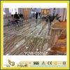 Galettes jaunes Polished de pierre d'Onyx Tara pour le plancher (YQW-OS1006)