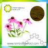 4 % de la polyphénol, Echinace purpurea 1% 2% 4% acide Chicoric extrait d'échinacée