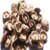 Hersteller des Pilzes Extract/FDA; ISO22000; Rein; SGS; Halal