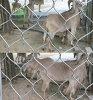 動物園のためのBaina 316のステンレス鋼ワイヤーロープの編まれた網