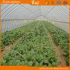 식물성 설치를 위한 널리 이용되는 갱도 온실