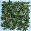 Recinto artificiale dell'EDERA del giardino della decorazione del recinto della barriera artificiale domestica dell'erba