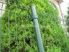 パネルPVC上塗を施してある庭の塀を囲う溶接された金網