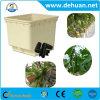 Dutch/cubeta de Bato para sistemas hidropónicos comerciais