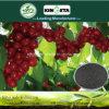 Kingeta contiene efficace il fertilizzante composto basato NPK 15-5-10 del fertilizzante del carbonio carbonio