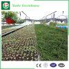 Fornecedor hidropónico de vidro da casa verde para a plantação vegetal da flor do tomate