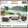 Sofá al aire libre/sofá de la rota (SC-B6018)