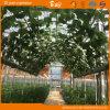 De Serre van het Glas van de Leverancier van China voor het Planten van Komkommer/Tomaten