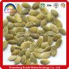 Fábrica de extrato de sementes de abóbora orgânica de alta qualidade