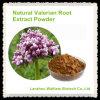 Polvo natural puro del extracto de la raíz de la valeriana de la alta calidad