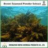 طبيعيّة عشب بحر [بروون سويد] مسلوقة مقتطف مع [فوكيدن] 85% - 90% [هبلك] [فوكإكسنثين] 20%