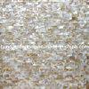 Madreperla del mosaico delle coperture (HMP62)
