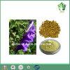 Естественная выдержка Baicalin 85%~95% Baicalensis Scutellaria, Sku-Baicalin 20%~95%