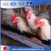 Couche d'oeufs de volaille galvanisée Electro Galaxed Cage de poulet
