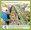 가득 차있는 자동적인 통조림으로 만들어진 물고기 생산 라인
