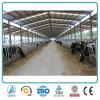 Аграрный светлый Prefab амбар молокозавода сарая скотин стальной структуры