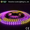 크리스마스 훈장을%s 프로그램되는 마술 꿈 색깔 5V 유연한 LED 지구 2812