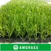 Относящи к окружающей среде содружественная Landscaping трава
