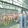 フルセットの鶏の製造プラントの機械装置