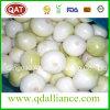 Livro Branco Roxo vermelho fresco cebola Pelado Exportar para o mercado Austrilia