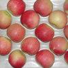 Proveedor profesional de la manzana roja fresca de la gala
