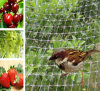 Usine Suppy Plastic Anti Birds Net / Safety Protection Netting