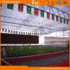 중국 공급자 PC 장 다중 경간 Venlo 유형 온실