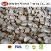 Estándar de exportación de setas Champignon enteros congelados