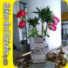 Баки завода вазы цветка металла нержавеющей стали миниые декоративные