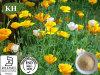自然なハナビシソウのエキスのアルカロイド0.6%、0.8%の滴定