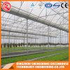 Landbouw Plastic Film Greenhouse voor Groenten / Bloemen / Tuin