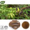 Acanthopanax Gracilistylus Auszug Eleutherosides 0.8%-1.5% HPLC