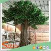 Venta caliente árbol Ficus Artificial Decoración de interiores