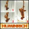 Organische Meststof sh9004-6 Kalium Humate van Huminrich van Leonardite