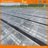기술 Venlo 네덜란드 유형 유리 온실