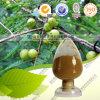На заводе Прямые поставки высококачественного Phyllanthus Emblica извлечения