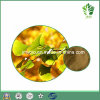 Ginkgolic Säure5% Ginkgo-Blatt-Auszug, Terpen-Laktone 6%